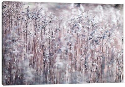 Cotton Tops Canvas Art Print