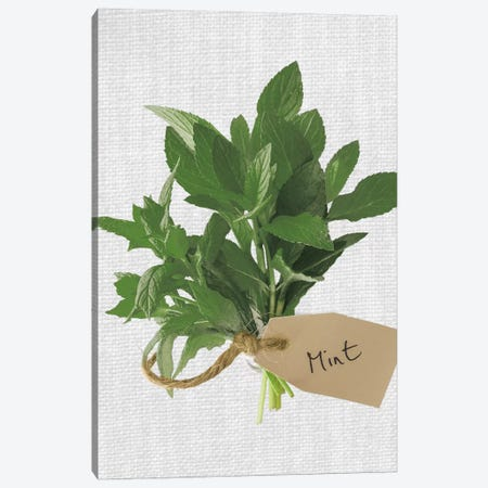 Mint Canvas Print #AFR74} by Assaf Frank Canvas Art Print