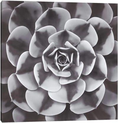 Natural Design III Canvas Art Print