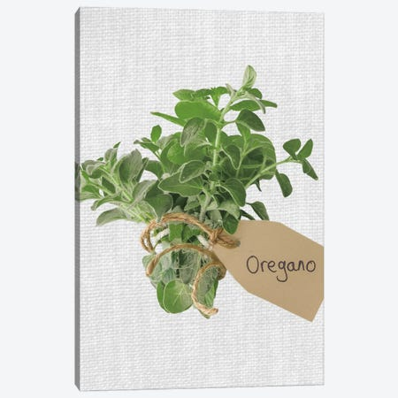 Oregano Canvas Print #AFR77} by Assaf Frank Canvas Print