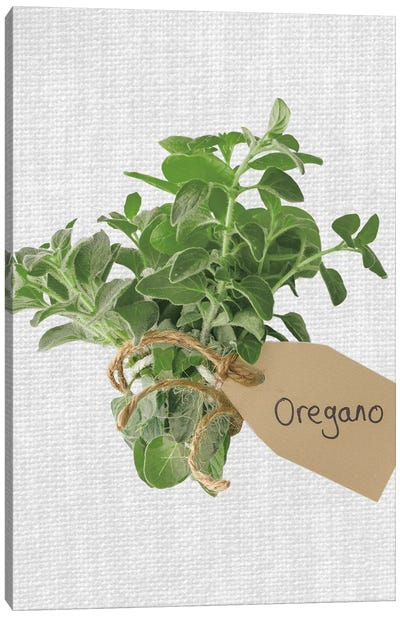 Oregano Canvas Art Print