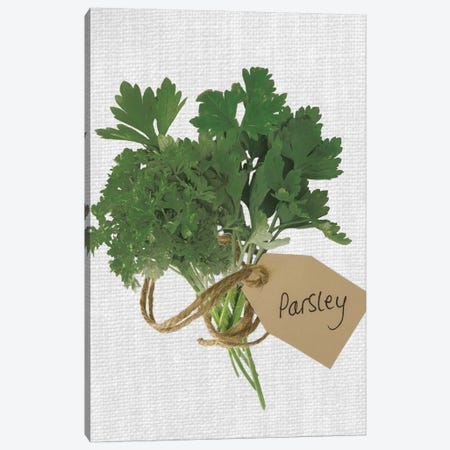 Parsley Canvas Print #AFR78} by Assaf Frank Canvas Wall Art