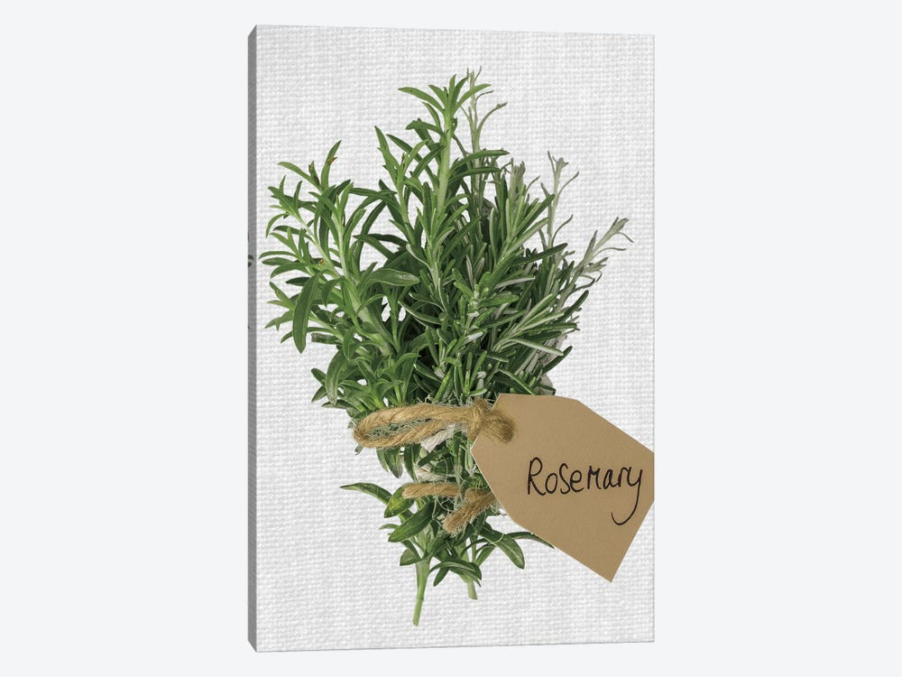 Rosemary by Assaf Frank 1-piece Canvas Wall Art