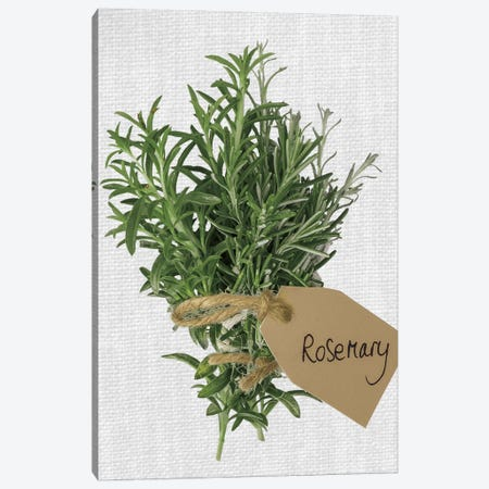 Rosemary Canvas Print #AFR79} by Assaf Frank Canvas Wall Art
