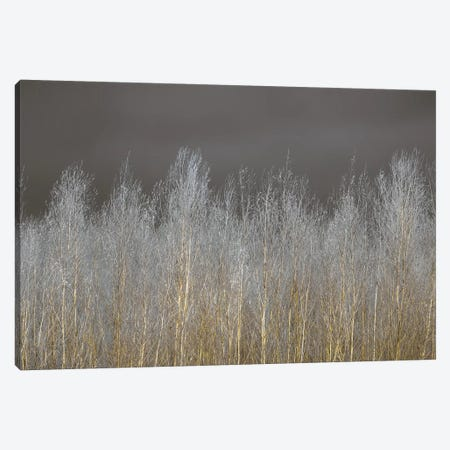 Silver Forest Canvas Print #AFR81} by Assaf Frank Art Print