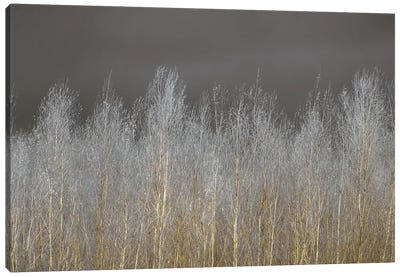 Silver Forest Canvas Art Print