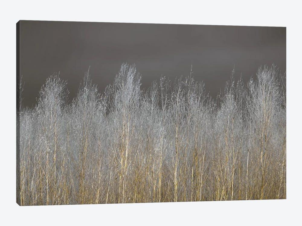 Silver Forest by Assaf Frank 1-piece Canvas Print