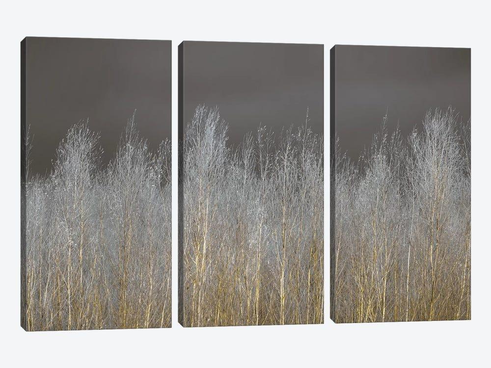 Silver Forest by Assaf Frank 3-piece Canvas Art Print