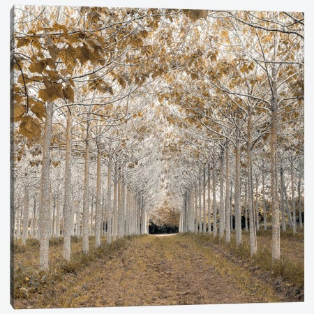 White Gold Canvas Print #AFR83} by Assaf Frank Canvas Art Print