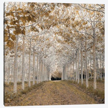 White Gold Canvas Print #AFR83} by Assaf Frank Canvas Art Print