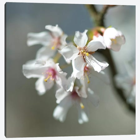 Blossom Canvas Print #AFR85} by Assaf Frank Canvas Art