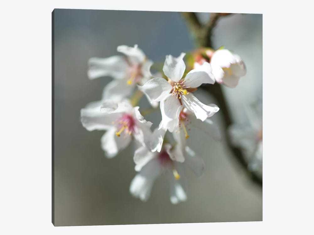 Blossom by Assaf Frank 1-piece Art Print