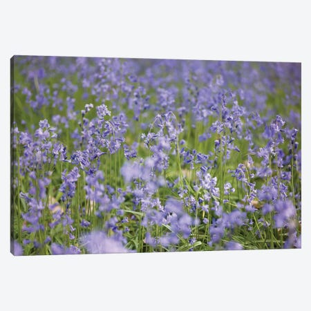 Bluebell Wood Canvas Print #AFR86} by Assaf Frank Canvas Wall Art