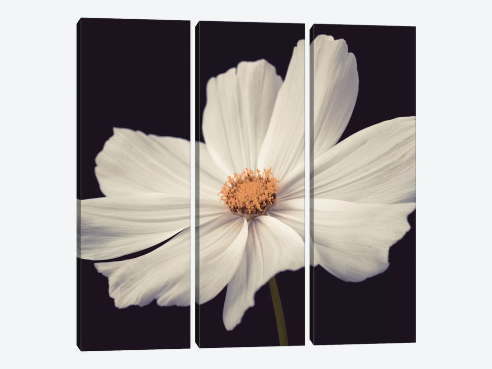 Cosmos II by Assaf Frank 3-piece Canvas Wall Art