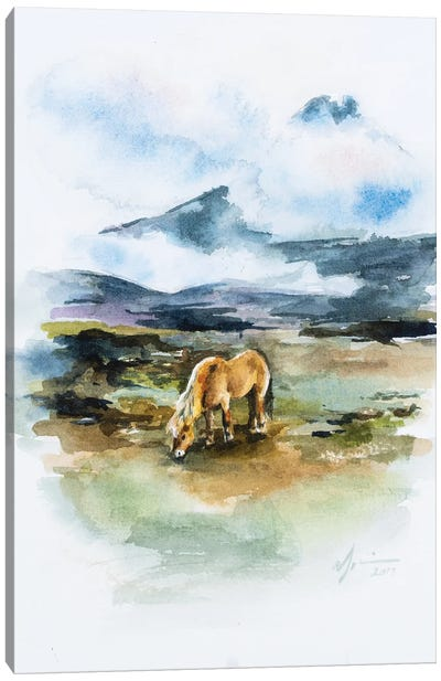 Icelandic Horse Canvas Art Print