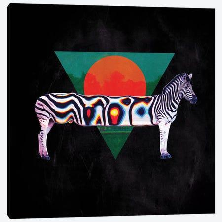 Zebra, Square Canvas Print #AGC105} by Ali Gulec Canvas Wall Art