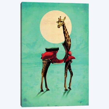 Giraffe Gb #2 Canvas Print #AGC13} by Ali Gulec Canvas Artwork