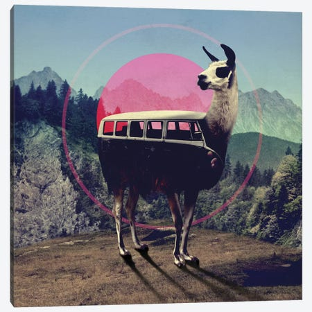 Llama Canvas Print #AGC22} by Ali Gulec Canvas Art Print