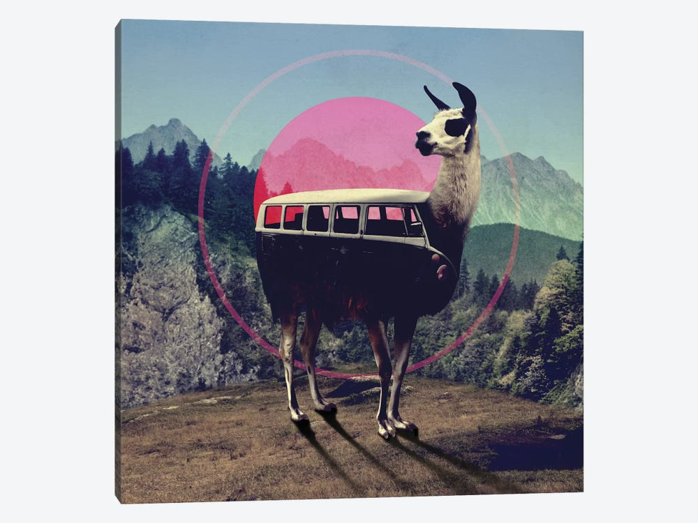 Llama by Ali Gulec 1-piece Canvas Art
