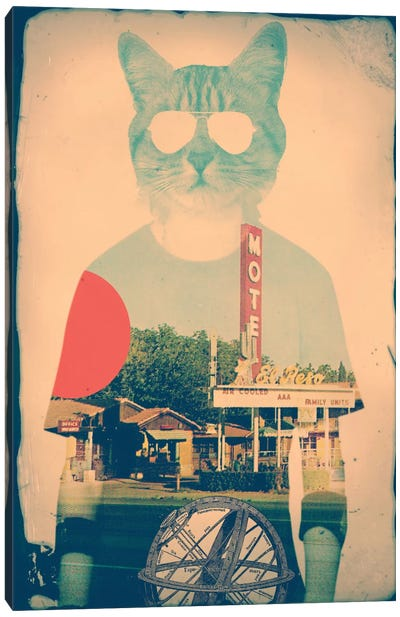 Cool Cat Canvas Print #AGC3