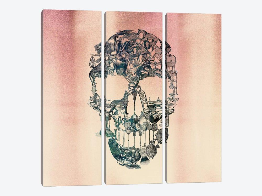 Skull Vintage, Square by Ali Gulec 3-piece Canvas Print