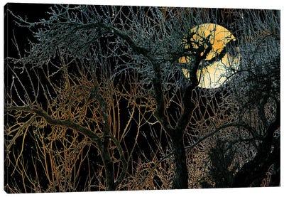 Harvest Moon Canvas Art Print