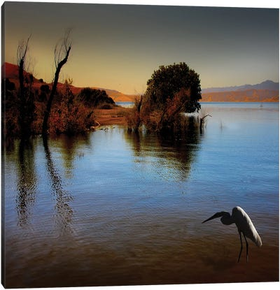 Duck Pond Canvas Art Print