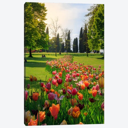 Tulipan Path Canvas Print #AGN45} by Andrea Dall'Agnola Canvas Print