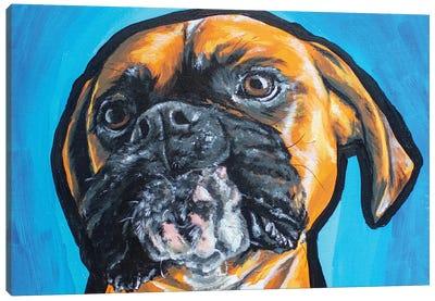 Boxer Acrylic Canvas Art Print