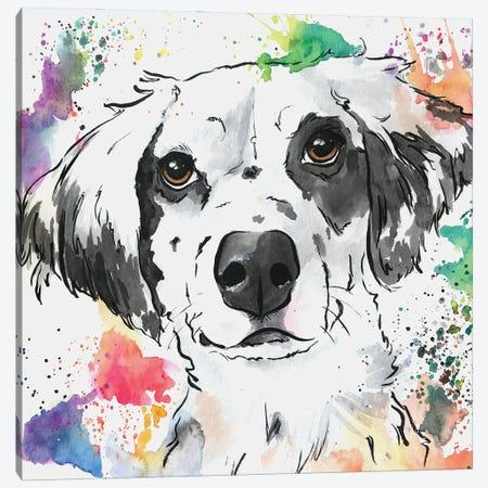 Brilliant Spaniel Mix Dog Canvas Print #AGY16} by Allison Gray Canvas Art Print