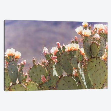 Prickly Pear Cactus Blooms Canvas Print #AHD122} by Ann Hudec Canvas Art Print