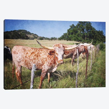 Texas Longhorns III Canvas Print #AHD162} by Ann Hudec Art Print