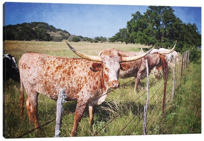 Texas Longhorns III Canvas Art Print