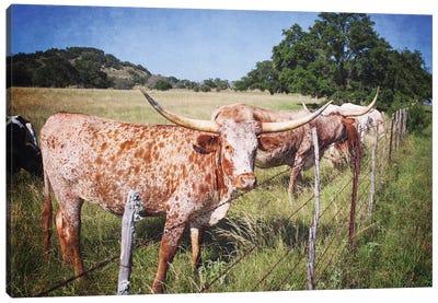 Texas Longhorns III Canvas Art Print