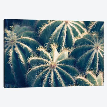 Cactus Garden II Canvas Print #AHD16} by Ann Hudec Canvas Artwork