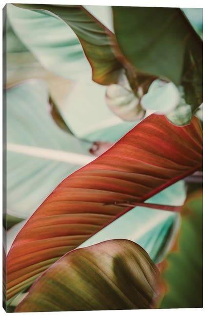 Tropical Hues Canvas Art Print