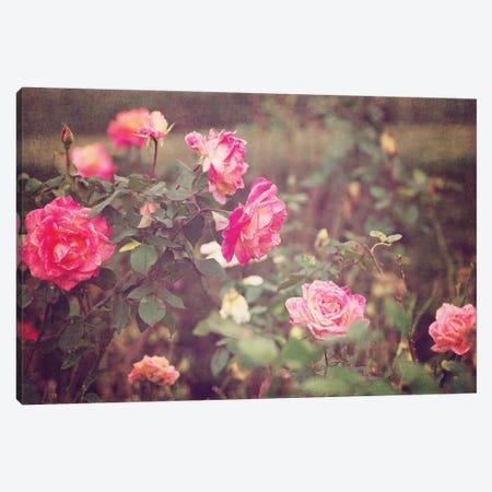 Vintage Roses Canvas Print #AHD183} by Ann Hudec Canvas Art Print