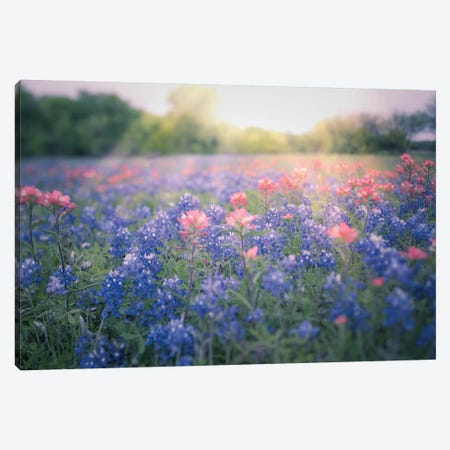 Texas Bluebonnets Canvas Print #AHD196} by Ann Hudec Canvas Art Print