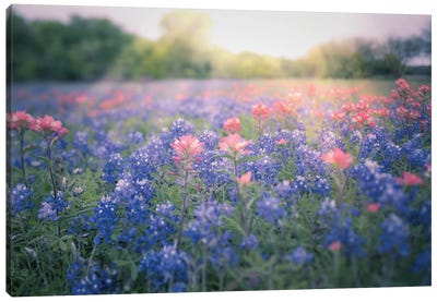 Texas Bluebonnets Canvas Art Print