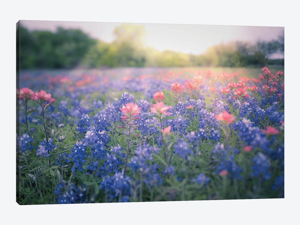 Texas Bluebonnets by Ann Hudec 1-piece Canvas Art
