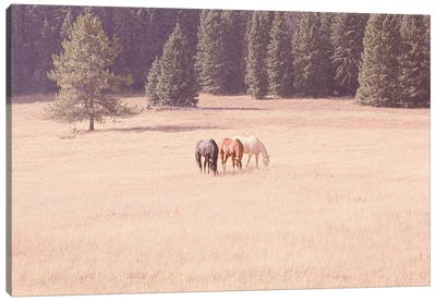 Montana Horses Canvas Art Print