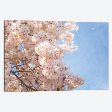 Cherry Blossoms 3-Piece Canvas #AHD200} by Ann Hudec Canvas Art