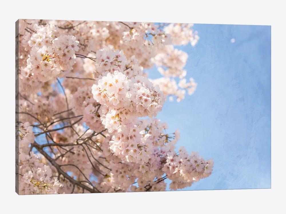 Cherry Blossoms by Ann Hudec 1-piece Art Print