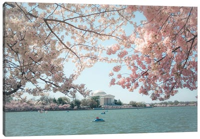 Washington Dc Cherry Blossoms Canvas Art Print