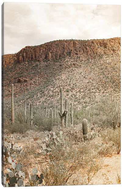 Desert Heart - Tucson, Arizona Canvas Art Print