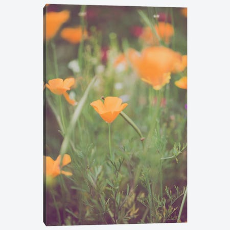 California Golden Poppies I Canvas Print #AHD211} by Ann Hudec Canvas Art Print