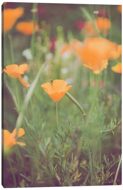 California Golden Poppies I Canvas Art Print