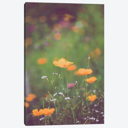 California Golden Poppies II Canvas Print #AHD212} by Ann Hudec Canvas Print
