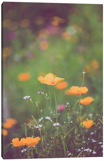 California Golden Poppies II Canvas Art Print