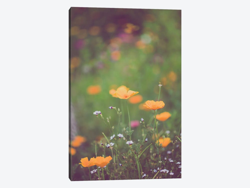 California Golden Poppies II by Ann Hudec 1-piece Canvas Art